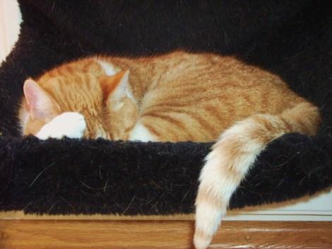Ik ben Timo en ik slaap schattig.